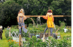 A small photo of Allotment Open Day